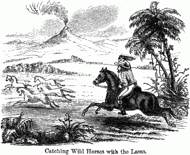 A man on his horse with a lasso chasing a herd of horses.